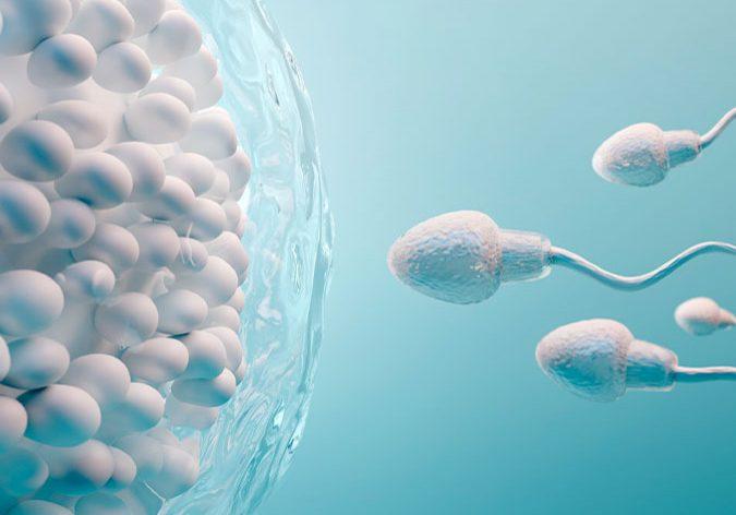 Fertilidad-funcional---Regenera-Academy